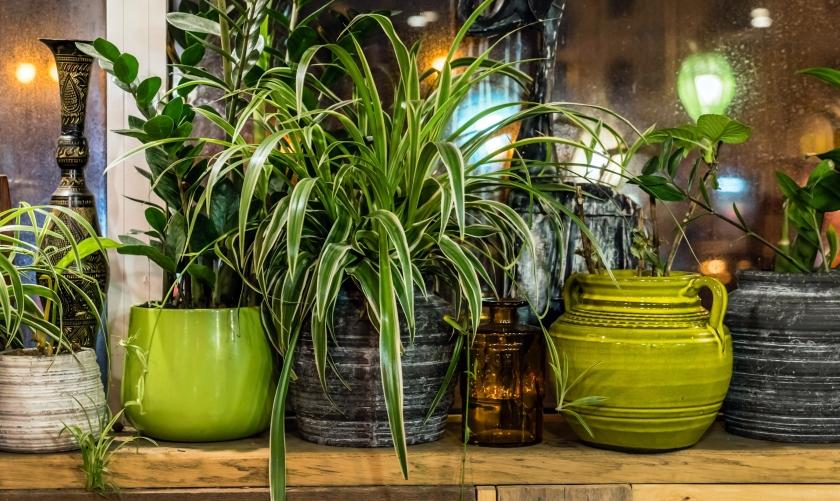 utah air purifying house plants.jpg